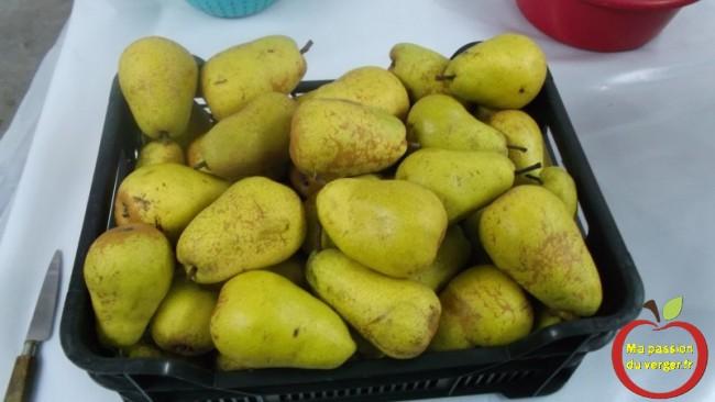 Pour faire 14 litres de nectar, il me faut environ 12 kg de poires.