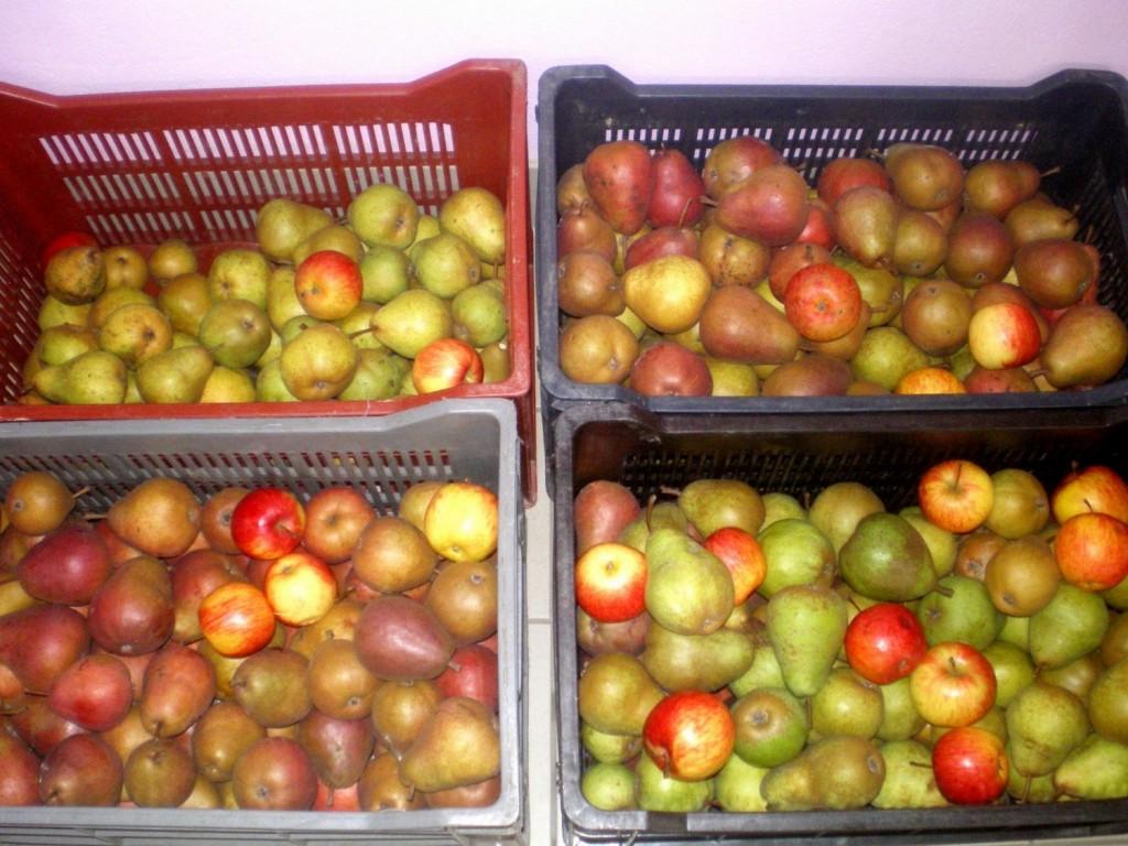 pour faire murir les poires plus vite, on peut rajouter des pommes