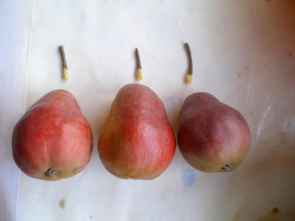 Trois poires de différentes couleurs, mais bonnes.