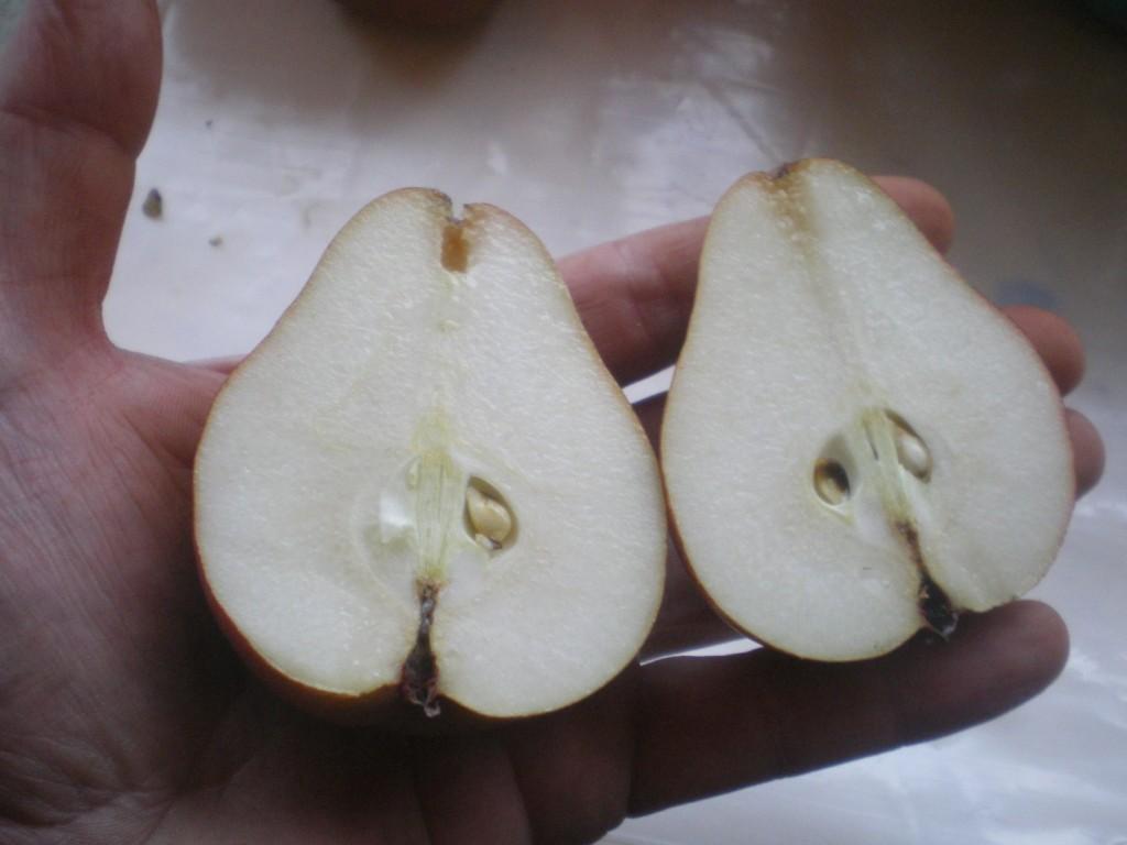 la bonne maturite de la poire wiiliams pour la mise en fut