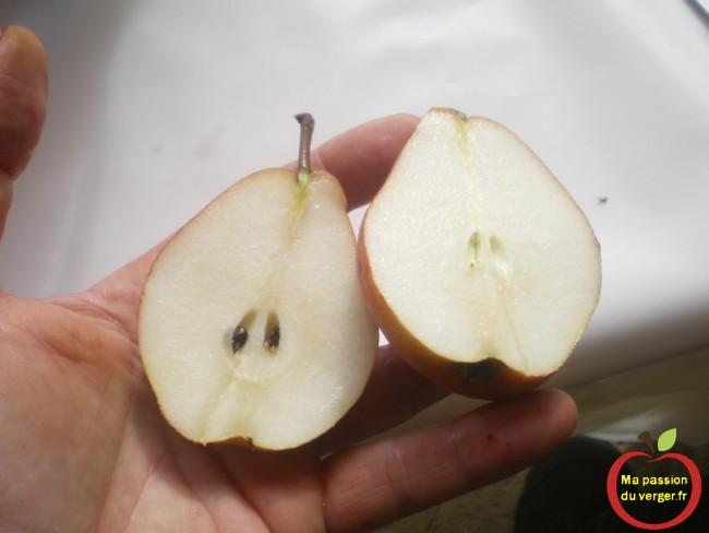 La saveur des fruits est déterminante pour la cueillette des fruits du verger