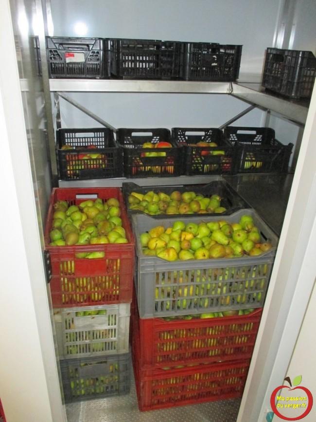 stockage des poires williams avec les pommes pour faire murir plus vite