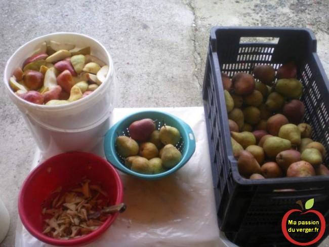 preparation-poire-williams-mis-en-fut- alcool la préparation des poire williams pour la mise en fut pour une eau de vie exceptionnelle ma passion du verger