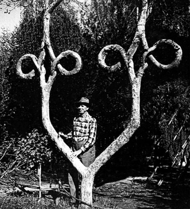 arbre original avec greffage du tronc
