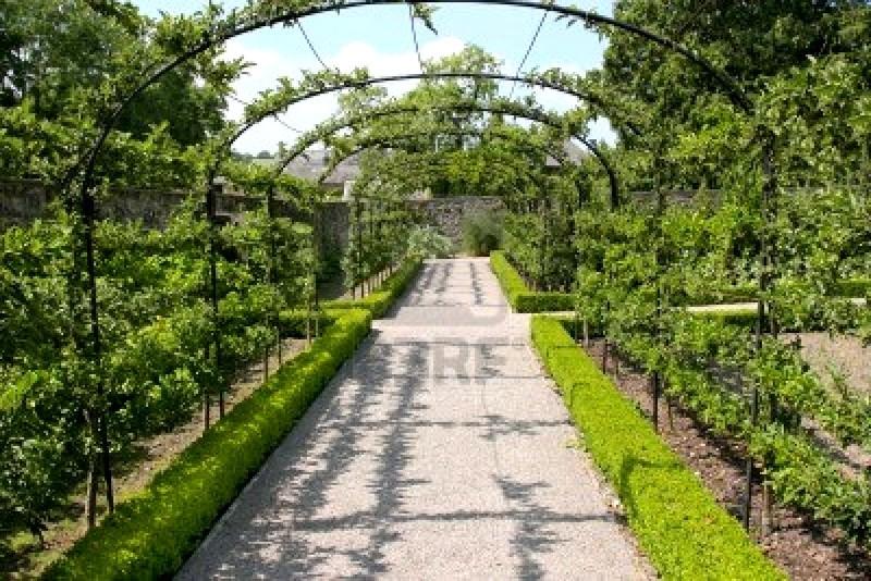 ciliegio-percorso-in-estate-con-alberi-da-frutto-la-formazione-a-crescere-nei-telaio-a-forma-di-arco