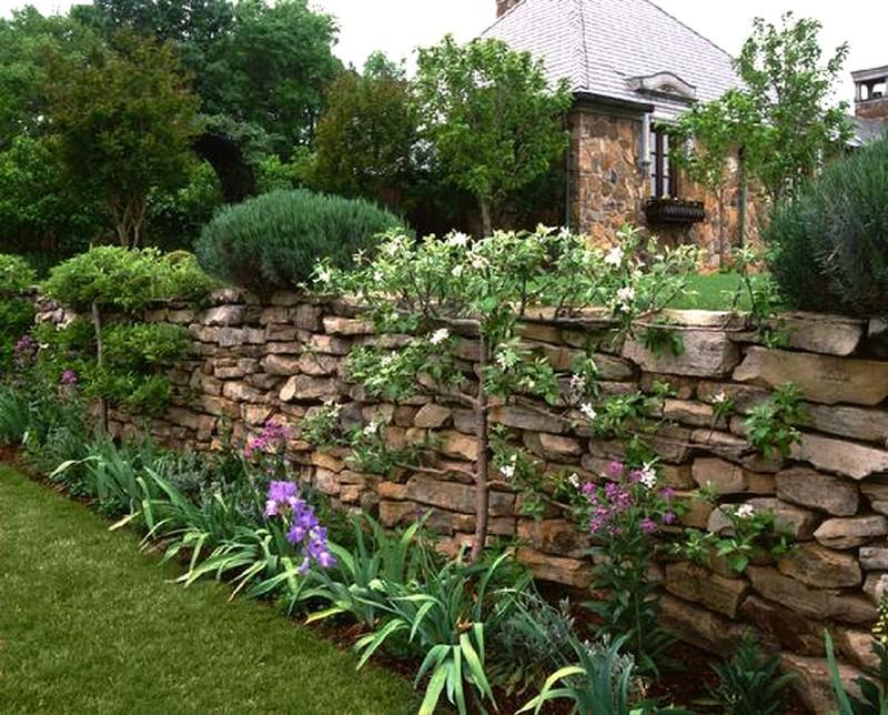 Palmette horizontale à trois étages contre le mur du jardin