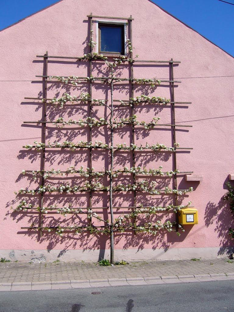 Palmette horizontale sur façade de maison