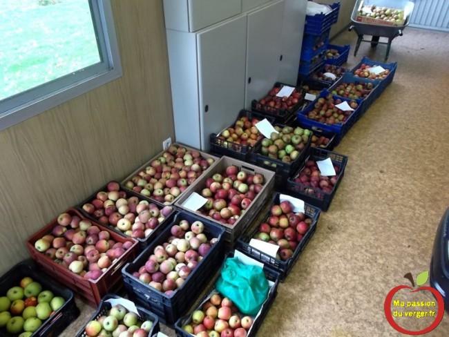mes pomme du verger pour la conservation en hiver - conservation des pommes
