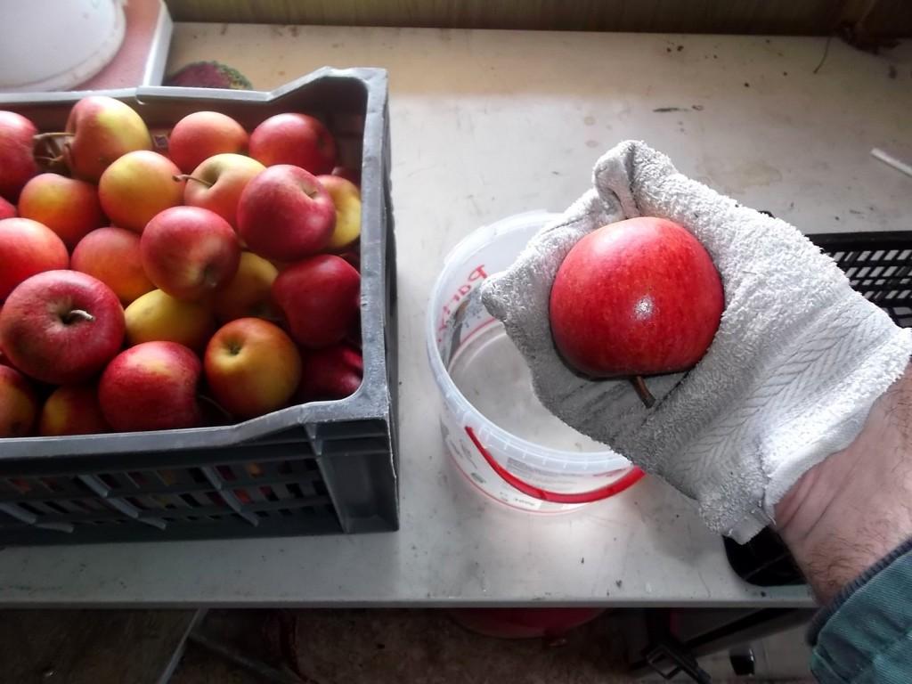 Pour la conservation, laver les pommes avec de l'eau avec 10% de javel pour les désinfecter.