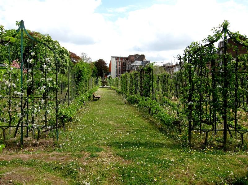 _jardin_arboriculture