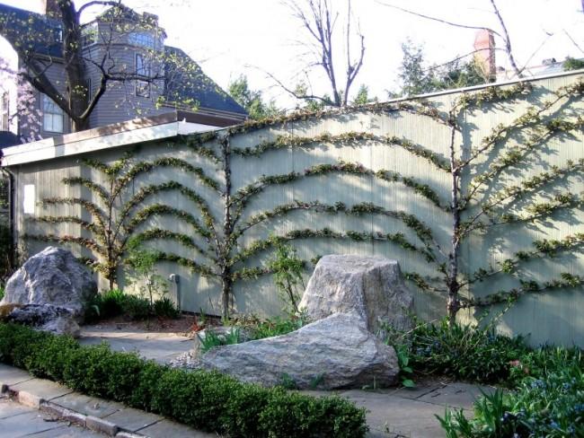 Palmette chinoise contre le mur