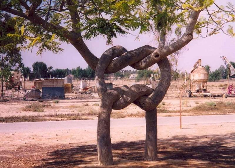 aharon-naveh-arbre original