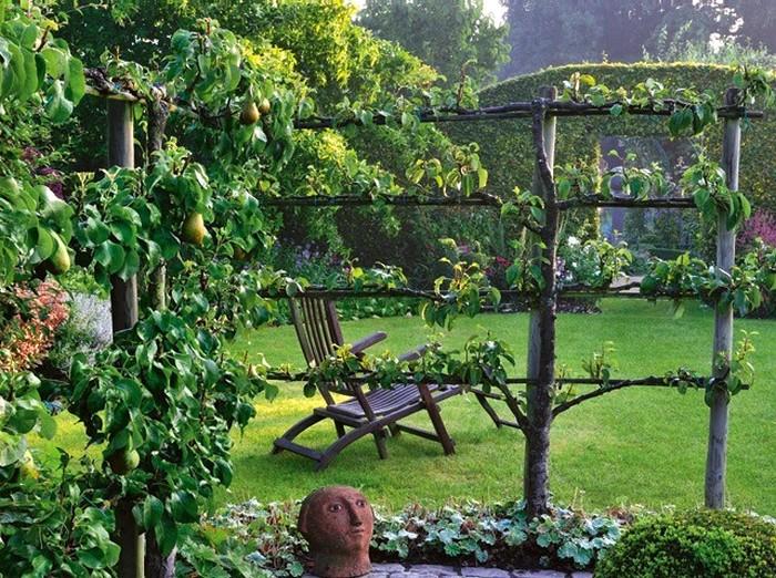arbres-fruitiers_Pommiers en palmettes Ferraguti (4 étages) dans le jardin