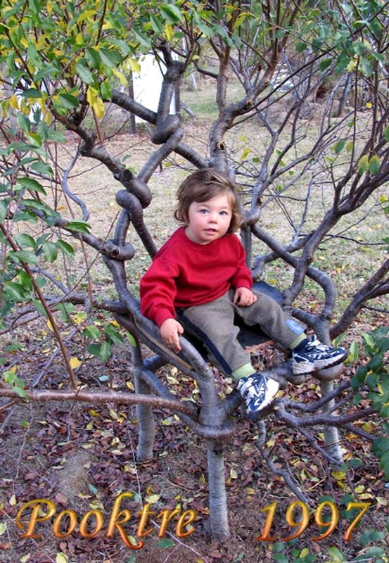 brinchair arbre original en chaise