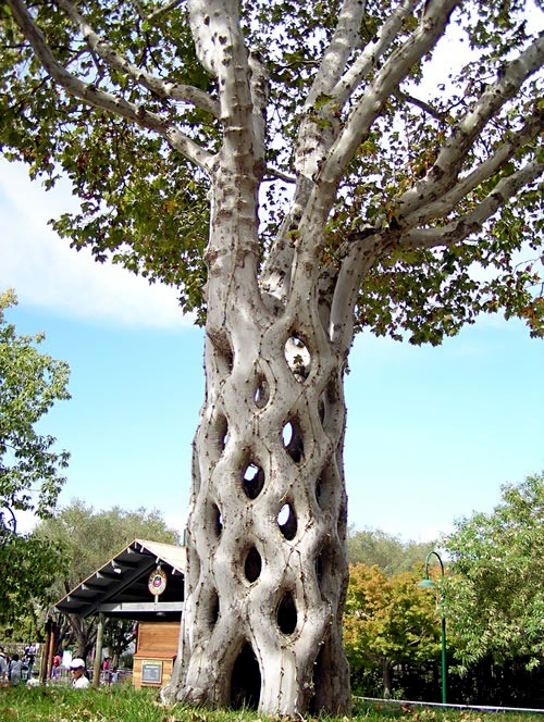 arbre original avec dressage du tronc