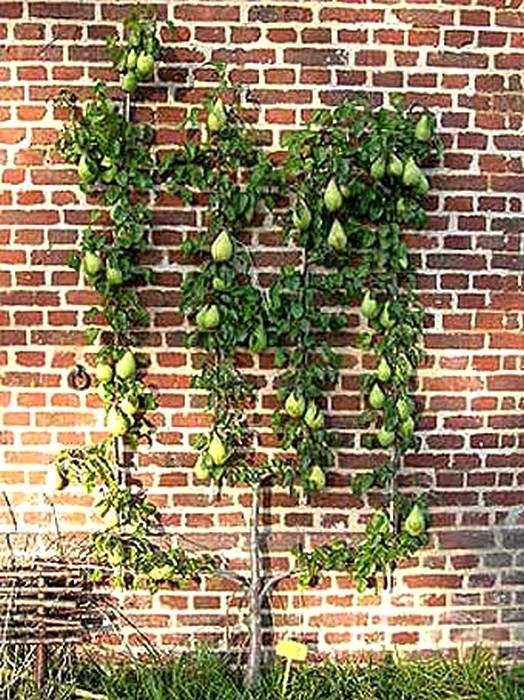 Palmette Verrier à quatre branches