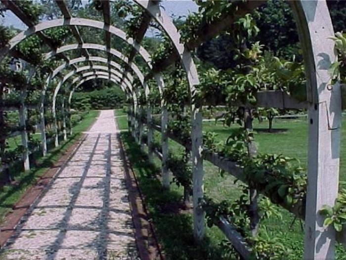 Arches avec pommiers en palmette horizontale _apple_tree_