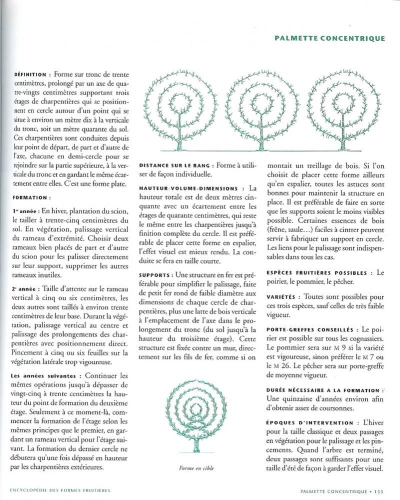 palmette concentrique