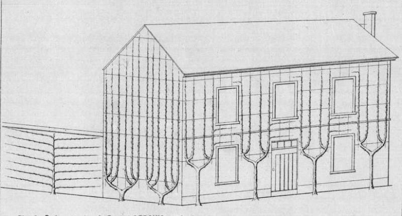 palmettes sur façade maison