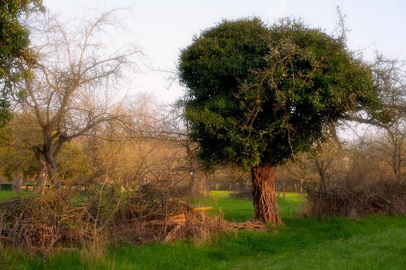 Alter_Baum_