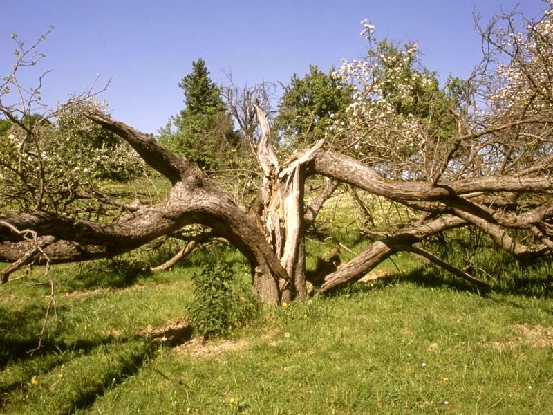 Baum_zusammengebrochen_Foto_Herwig_Winter