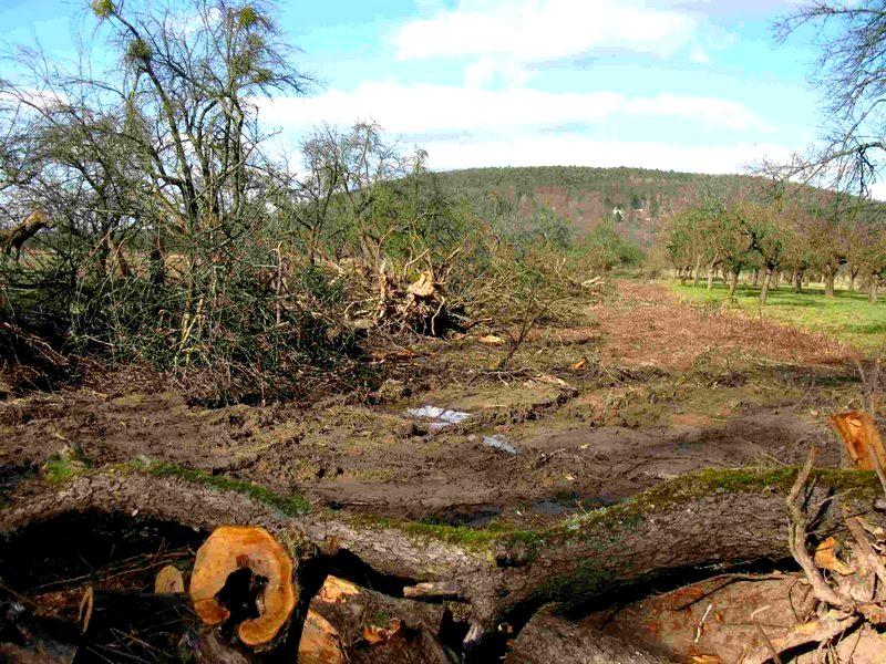 Grünspecht-vogel-des-jahres-2014-lbv-Zerstörung-Streuobstwiese-Thomas-Staab