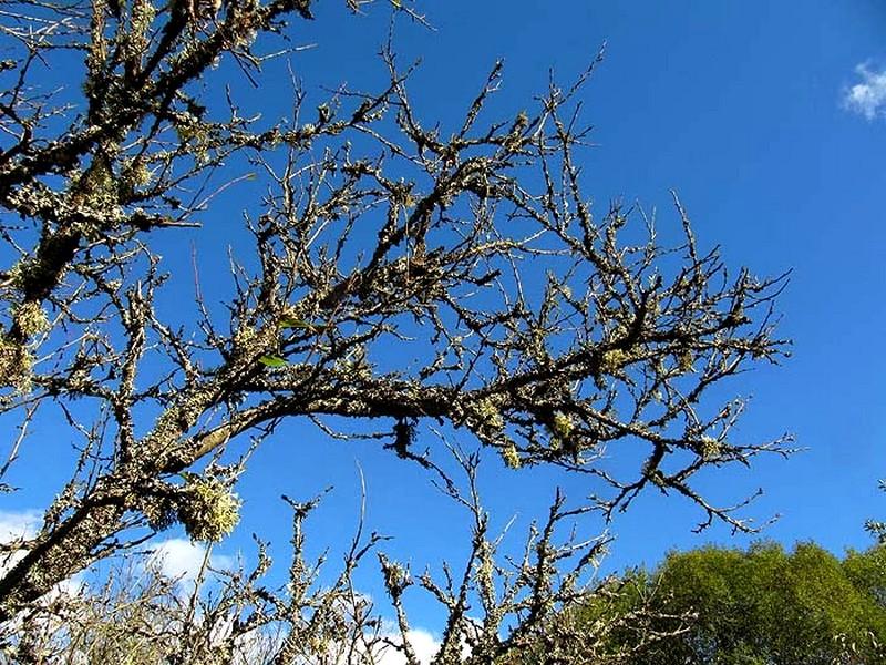 Lichens vergers (3)