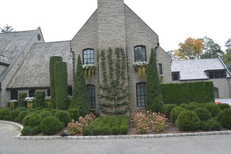 Palmette sur façade maison