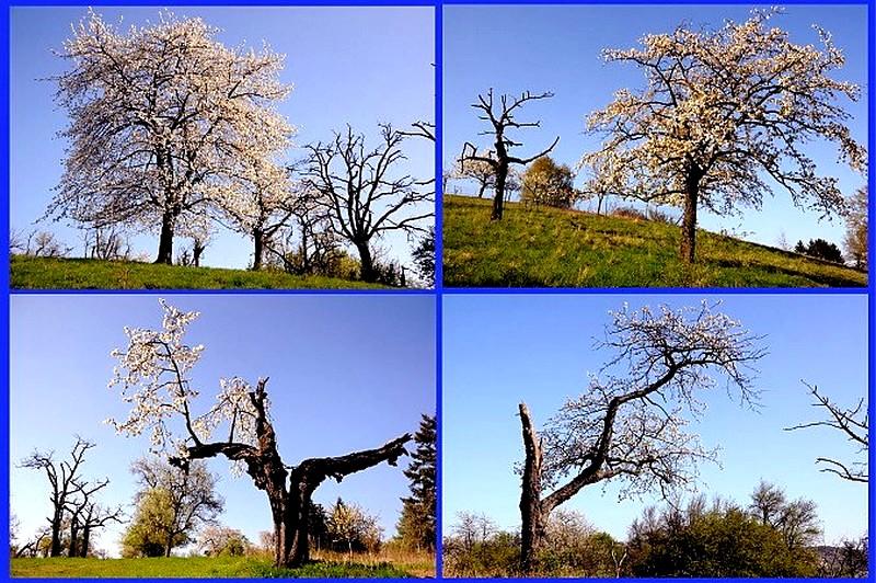 Streuobstwiesen_2642010