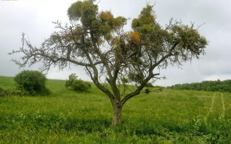 Toter_Baum_und_dennoch_gruen