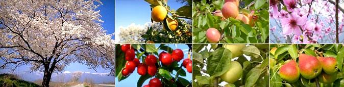 arbres-fruitiers-jardinerie