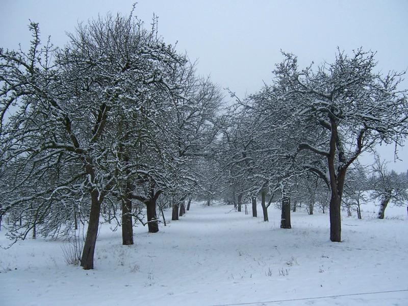 streuobstwiese-im-winter