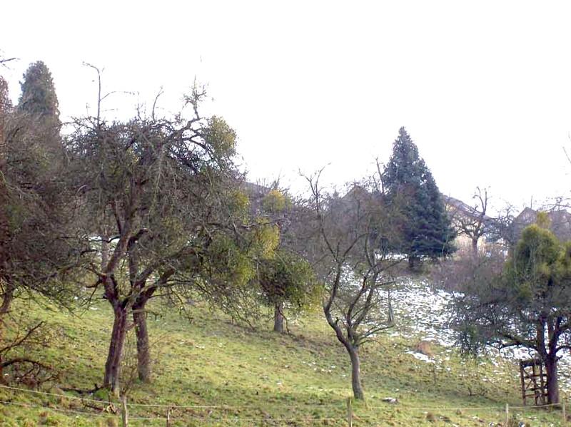 winden-obstbaume_003