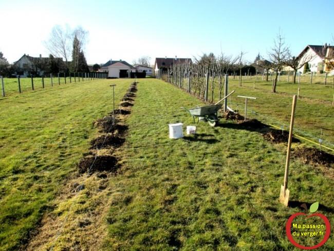 Début de plantation scions au printemps