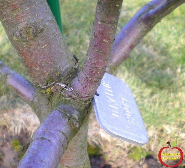 ne pas attacher les étiquettes avec un fil sur une branche -