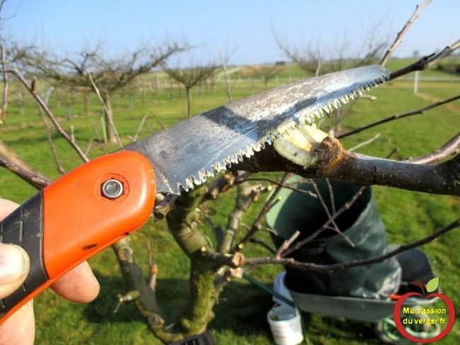 Il faut couper en biseau, favoriser le recouvrement et la cicatrisation des greffes.