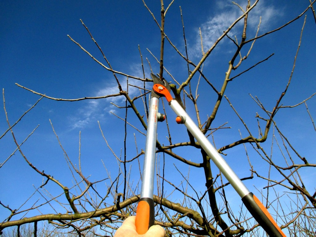 Les différentes tailles des arbres fruitiers
