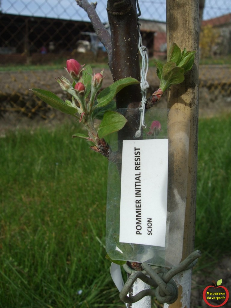 7-Etiquetage de l-arbre fruitier