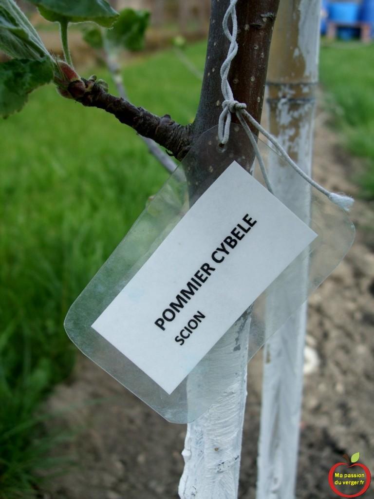 7 bis- Etiquetage de l-arbre fruitier(1)