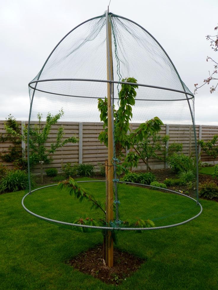 Cage pour protection cerise anti-oiseau.