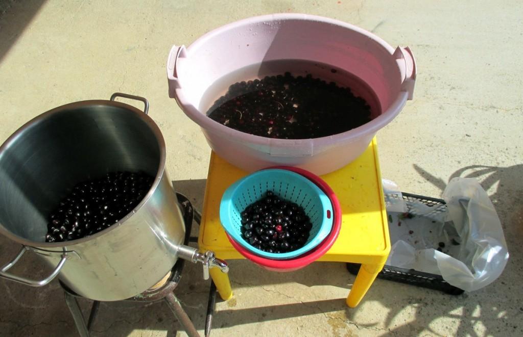 Préparation des cerises pour faire le jus.
