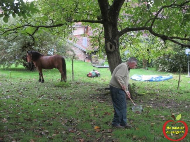 Nous avons même testé ce ramasse-noix, dans le parc à chevaux, avec un terre très humide et collante. Pas de souci, ça marche.