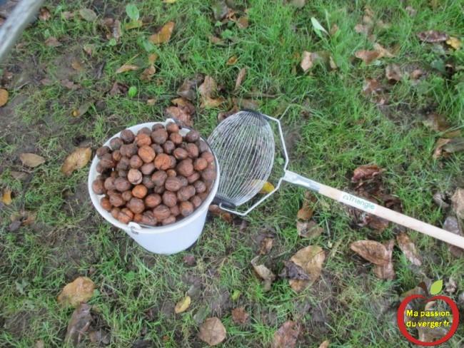 Avec le ramasse-noix, en quelques minutes, un seau de 10 litres de noix, sans se baisser et se fatiguer.