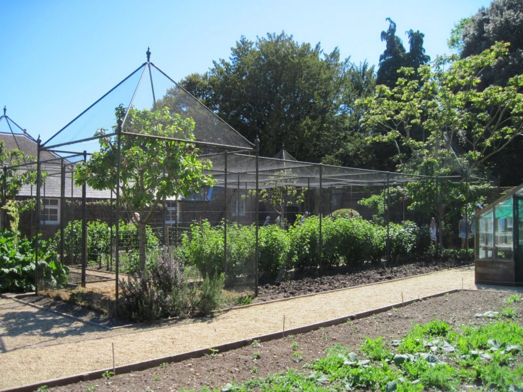 Cage pour protection cerise anti-oiseau haut de gamme