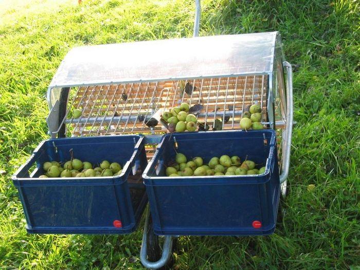 Ramasseuse à pousser très pratique, pour la récolte de vos pommes à jus ou de transformation (Obstigel)