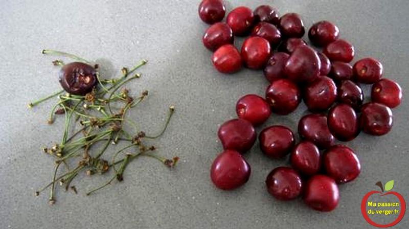 Équeutées les cerises et enlever les fruits pourries.
