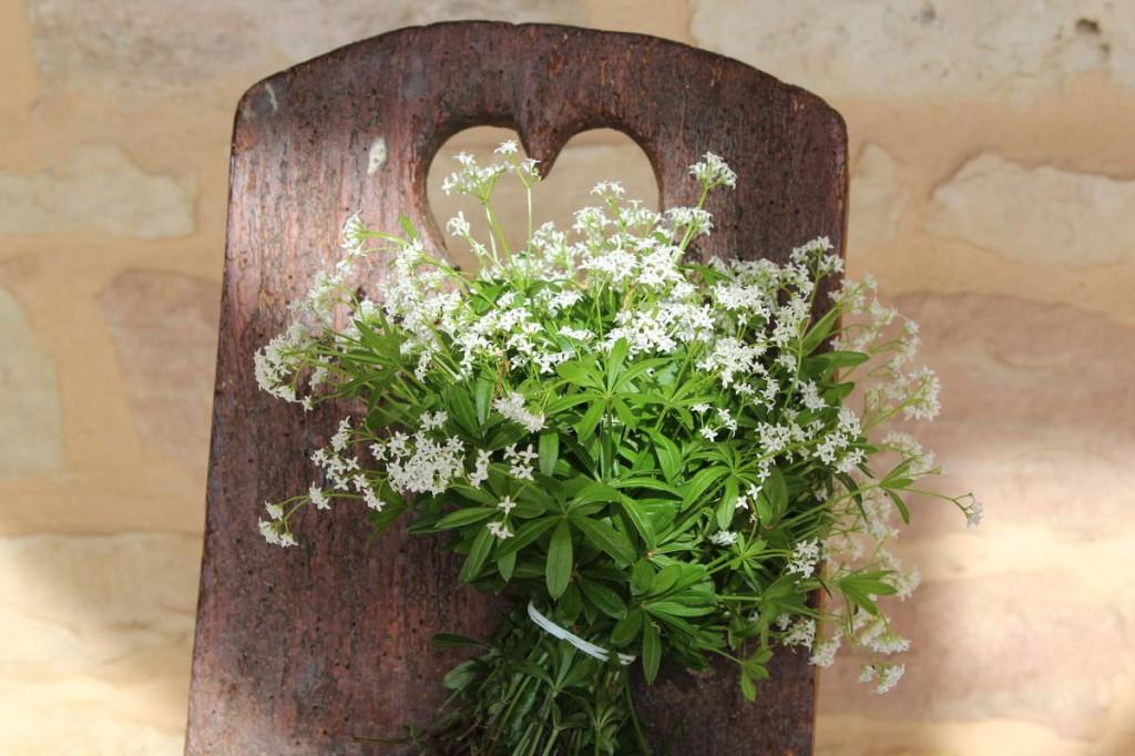 Séchage d'un bouquet d'aspérule odorante