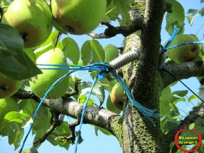 haubanner une branche