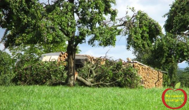 Branches cassées - mauvais étayage - trop de fruits sur l'arbre -