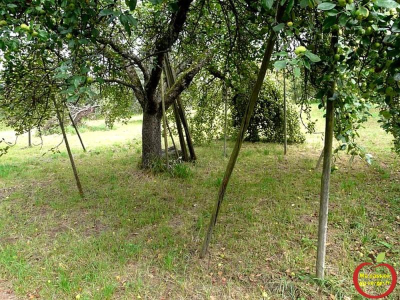 fruit-tree-59917_640